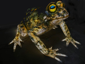 new-frog